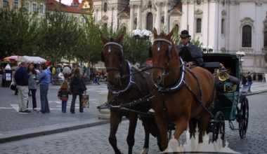 Group Prague Transportation - Horse Drawn Carriages 4